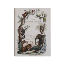 Petit cahier d'écolier-Histoires naturelles